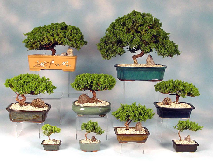 Learning The Art Of Bonsai Can Calm Your Nerves By The Whistling Gardener News Of Mill Creek