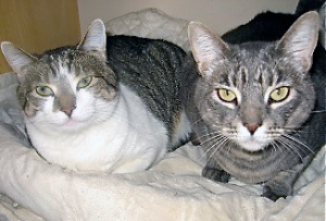 mma and Nellie are two sisters that are very bonded and will need to be adopted together.