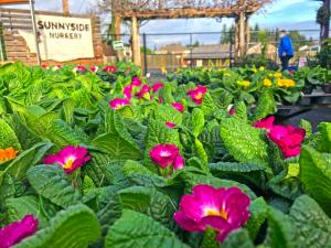 Okay my gardening friends, 2020 is behind us and it is time to start drooling over the seed catalogues and visiting garden centers to see what looks interesting this time of year. While January may seem like a slow month in the garden, it is a very busy one in the garden center.