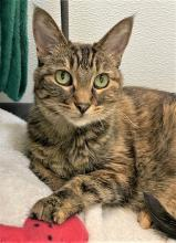 Our cat of the week Allie is one special kitty. She greets everyone with a sweet little meow and then trots right over for pets. She loves a good cheek and chin rub and once the purring gets going, it seems like she may never stop!