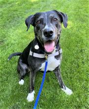 Our dog of the week Ashley is all about that spunk. She's fun-loving, enthusiastic and most importantly of all – she's your new best friend! Ashley is ready to spend her days hiking, running and exploring with her new favorite human…you!