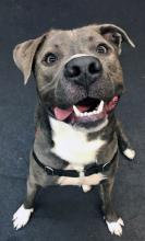 Have you heard the news about our dog of the week Blue? He's been the talk around town because he's breaking all sorts of records around here! Time spent smiling: 24 hours per day. Tricks done per day: 455. Hours spent every day being a good boy: 24. Look at those numbers!