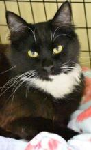 Meet Alex at Homeward Pet in Woodinville. Photo courtesy of Homeward Pet.