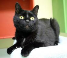 This fabulous feline is bursting at the seams with love, affection and playfulness. Our cat of the week Basil proves that you can have it all – handsome looks and a winning personality! Plus, he's got a cute name! Come check out what Basil's all about!