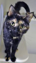 Cassandra just might be the smartest kitty you've ever met.  Photo courtesy of Homeward Pet.