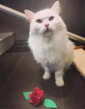 Meet sweet Coco today at Seattle Humane! Photo courtesy of Seattle Humane.