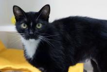 At just over a year old, our cat of the week Kit is ready to rock your world. She's got style and charm and will make your life the happiest it's ever been. She might be little in size – five pounds! – but she has all the personality of a cat twice her size.