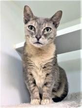 Our cat of the week Luna is as lovely as the moon and would happily orbit around you! At nine-years-old, Luna is the perfect age. She's playful and silly, but also knows the value of a good snuggle session and a snooze on the sofa or on top of a cat tree.