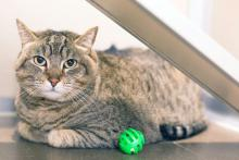 Meet Minnie Squirrel at Seattle Humane today!  Photo courtesy of Seattle Humane.