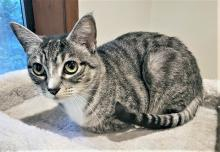 Our cat of the week Mouse McMuffin proves age is nothing but a number. What matters is how you feel on the inside, and shefeels great! At 18-years-young, Mouse McMuffin enjoys playing with cat nip toys, watching birds outside the window and snuggling with her people.