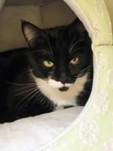 Nobi is looking for a new home in 2018! Photo courtesy of Homeward Pet.