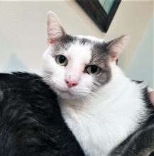 Our cat of the week Sam is one of those cats that just make you feel so good to be around. He makes you truly believe that you're the best thing since sliced bread. He's affectionate, loving and gentle. And when we say he's affectionate, we mean it!