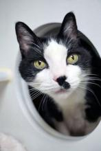 Smudgy is eager and ready to find his forever family.  Photo courtesy of Homeward Pet.