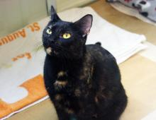 Susie adores people and has a huge amount of love to give!  Photo courtesy of Seattle Humane.