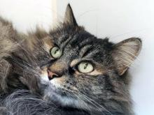 You won't find a sweeter or more snuggly cat than Suzie. This darling three year old loves getting pets - and you'll never want to stop petting her because she's so fluffy and soft! Spending time with our cat of the week Suzie will instantly put you in a good mood.