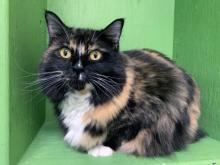 Our cat of the week Tuna is one fun feline! She has three favorite things to do during the day – play with toys, chat with her humans and snuggle in laps. She'll do them in any order at any time of the day. It doesn't get any better than that!