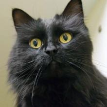 Wisky will wow you with her love of affection. Photo courtesy of Homeward Pet.