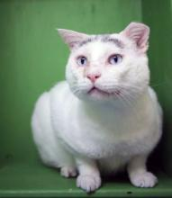 Meet our cat of the week Sitka! You won't find a chattier and more interactive kitty than this guy. At just three years old he's a young man and is ready to make your life so much better! He loves having conversations and will answer everything you ask him with an emphatic meow. Sometimes even two!
