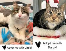 Like the greatest duos of all time, our cats of the week Lizzie and Darcy are charming, memorable and perfection together. These eight-year-old best friends are wonderful to have around. Their obvious affection for one another, and the affection they give their human, is precious and sweet.