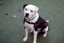 Meet Alder at Seattle Humane today! Photo courtesy of Seattle Humane.