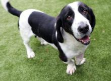 Come meet Banner at Seattle Humane today! Photo courtesy of Seattle Humane.