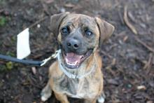 Meet Finnegan at Seattle Humane today!  Photo courtesy of Seattle Humane.