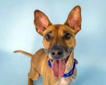 Our dog of the week Loki's got it all. Brains, looks, energy, and that special something you just can't quite put your finger on. Oh, and hops. He's got mad hops. He can jump so high – even from a stand still! This one-year-old Bulldog/Dachshund makes one fun dog.