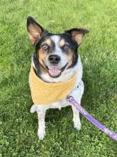 Our dog of the week Max is all about showing off his tricks – and wow does he have a lot of them! This six-year-old Cattle Dog is one smart cookie. He can ever roll over!