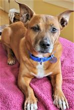 Our dog of the week Sheeba will be your best friend in no time flat. She warms up quickly and becomes a little shadow, cruising through life by her human's side. At nine-years-old, Sheeba knows the value of play, exercise and adventure, but also understands the importance of rejuvenation and rest.