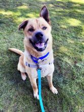 Our dog of the week Winn will be up for any outdoor adventure this summer. At one-year-old, Winn is all about living a fun and active lifestyle. He thrives when he's feeling grass under his feet, sniffing the breeze and relaxing in the sun.