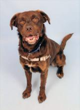 It's time to get summer ready! All you're missing is our dog of the week Jackson and then you'll be ready to go! This one and a half year old lab mix is eager to spend these long, sunny days with his new favorite human.
