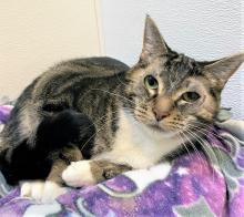If you're searching for a loving, faithful friend to keep you company day and night, our cat of the week Lacey is here and she's more than ready to meet you. After two months in our shelter, receiving different medical treatments, this sweet 12-year-old soul is eager to find her forever family.