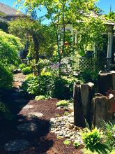 It is not often I write about dirt. I am referring to soil, earth, loam; you know, the stuff gardens are made of, not the scandalous gossipy stuff. I grew up in the 1950's observing my Mom tend our Ballard-area yard. Dad mowed the lawn, but she did most everything else to create a beautiful garden.