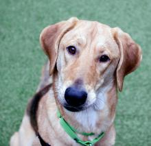 Meet our dog of the week McJingles, a one-year-old Hound! This happy wiggle worm loves a good adventure and will happily fetch all the toys you can throw for her. She also loves a good bum scratch and will trade plenty of sweet kisses for one.