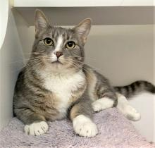Our cat of the week Patsy Cline will let out the sweetest little chirps when she sees you, and that means she'd like the petting to start – and stat! At one-year-old, Patsy Cline is playful and energetic, but also loves cuddling and snuggling with her humans.