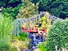 Not to be missed, an enchanting waterfall draws you into this stunning garden. Photo courtesy of Mill Creek Garden Club.