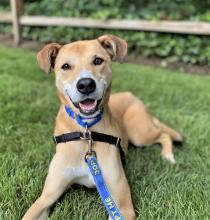 Our dog of the week Roxy will make you work for her affection and trust, but once she's handed it over, she'll never take it back!Roxy is about six years old, but you'll never believe that when you meet her. She's spunky, full of pep and doesn't hesitate to turn any situation into play time!