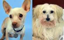 Our dogs of the week Ruth and Farrah are the perfect pair who complement one another in the most perfect way. Ruth is outgoing, confident and busy; Farrah is shy, sensitive and exceptional at snoozing. Together they make one precious duo.