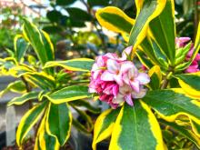 """Every time I walk through the nursery this time of year I am struck by the amazing variety of plants on display that have what I would call """"winter interest."""" By this I mean that they have some distinct quality that makes them stand out in the winter garden."""