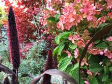 There is no excuse for a drab garden in the fall, or winter, considering that there is a multitude of plants to choose from that will brighten our gardens over the next five to six months.