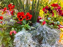I recently read an article on designing with foliage in the garden by a local author, Christina Salwitz. Her main point is that while flowers are ephemeral, foliage can last all season and therefore should be the first consideration in any garden design - be it in the landscape or simply in our containers.