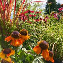 Perennials and grasses, what a perfect pair. Photo courtesy of Sunnyside Nursery.