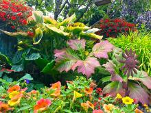 August can be a surprisingly busy month in the garden. There are timely chores, if attended to this month, that will improve the look and health of our plants. Here they are for your reading pleasure…