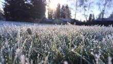 It looks like the next couple of weeks are going to be wet and cold and some preparation on our parts can help minimize any deleterious effects. We rarely see more than 10 to 14 days of continuous below freezing weather during the winter, but despite its short duration, it can do a lot of damage.