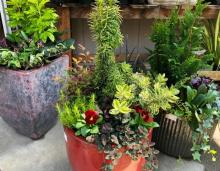 Create winter containers that will delight your senses all season long.  Photo courtesy of Sunnyside Nursery.